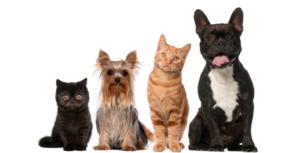 Алергічні реакції на домашніх тварин